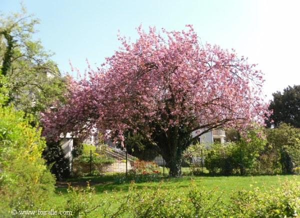 Art de la nature en saison du printemps impressions - Arbre fleurs rouges printemps ...