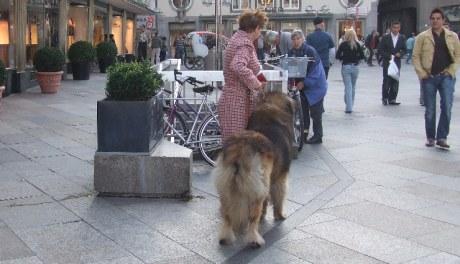 Site de rencontre chien belgique