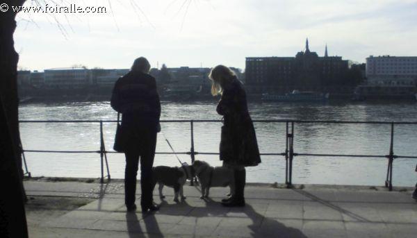promenade chien rencontre