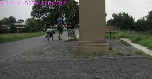 Site de rencontre proprietaire de chien