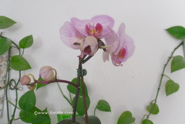 Blog orchidea images fleurs des orchides le flair de l for Catalogue fleurs et plantes