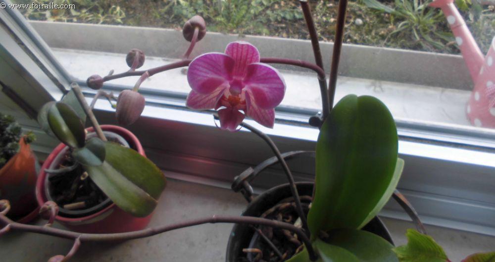 en hiver encore les fleurs de l 39 orchid es qui annoncent l 39 arriv e du printemps soleil et ciel bleu. Black Bedroom Furniture Sets. Home Design Ideas