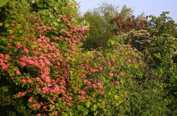 Blog plantes et fleurs du printemps saison en europe jardins boulevard for Fleurs et plantes