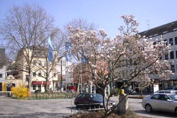 Blog fleurs printemps arbres fleuris vert chaleur soleil - Arbre japonais rose ...